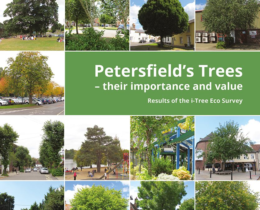 Petersfield's trees – their importance and value.